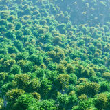 Draufsicht-Wald Lizenzfreies Stockfoto