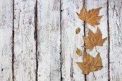 Draufsichtbild des Herbstlaubs über hölzernem strukturiertem Hintergrund Kopieren Sie Platz Stockfoto