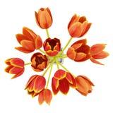 Draufsichtblumenstrauß der orange Tulpen im Vase getrennt auf Weiß vektor abbildung