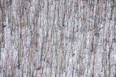 Draufsichtgruppe bloße Bäume im Winterschnee lizenzfreie stockbilder
