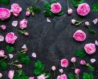 Draufsichtplan mit Rosen des rosa Tees, Knospen, Blumenblätter, Blätter auf dem dunklen Schwarzen entsteinen Hintergrund Blumenau Lizenzfreie Stockbilder