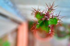 Draufsichtschießenmakrodetailhaut des Kaktus, Pelz, Dorne, Nadeln Kopieren Sie Platz Makro lizenzfreies stockfoto