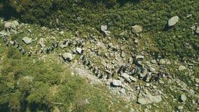 Draufsichtwandererleute, die auf Hintergrundgebirgsfluss reisen Wandern des Berges stockbilder
