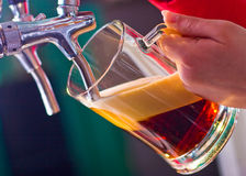 Draught beer. Glass being filled with draft beer by barman Royalty Free Stock Image