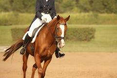 Dravend paard Stock Foto's