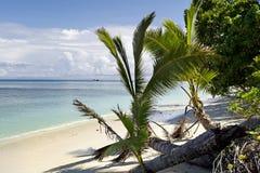 Dravuni ö-gömma i handflatan träd på stranden royaltyfri foto