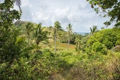 Dravuni-Insel, Fidschi stockbilder