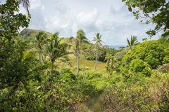 Dravuni wyspa, Fiji obrazy stock