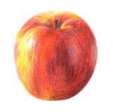 Draw apple. Color sketch ripe apple on the white Stock Photos
