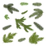 Draw. different branches of a fir-tree. Isolated. Close-up. A set of different Christmas tree branches. Isolated. Close-up. Set for Christmas decor Royalty Free Stock Photos