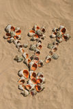 Draw maked of shells. Stock Images