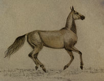 Drawing akhal-teke horse Stock Photos