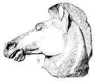 Drawing of an ancient greek horse statue Stock Photo