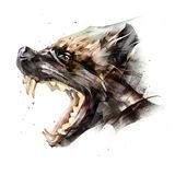 Drawing animal muzzle wolverine side view on a white background stock photography