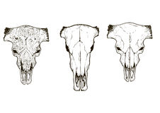Drawing animal skulls set, vector Stock Photos
