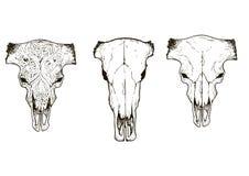 Drawing animal skulls set, vector Stock Photos