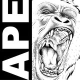 Drawing of a Ape`s head. Leader of a pack of gorillas. Aggressive monkey. Graphic design of the cover. Template for design. Vector. Drawing of a Ape`s head Royalty Free Stock Photo