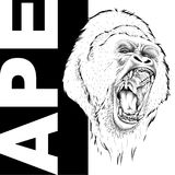 Drawing of a Ape`s head. Leader of a pack of gorillas. Aggressive monkey. Graphic design of the cover. Template for design. Vector. Drawing of a Ape`s head Stock Photography