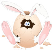 Easter Bunny - Cartoon Character - Vector Illustration Stock Photos