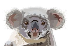 Drawing of the Australian koala. The bear cub looks at you an inquisitive glance vector illustration