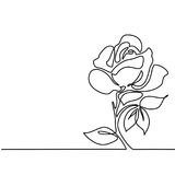 Drawing of beautiful flower Stock Images