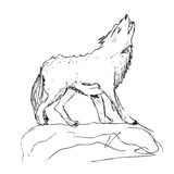 Drawing of a big wolf Royalty Free Stock Images