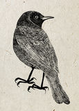 Drawing of bird trupial, black silhouette on beige rice paper background. Royalty Free Stock Images