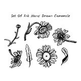 Drawing black ink - daisies set of flowers leaves. Branches on white background. Vector illustration Royalty Free Stock Images
