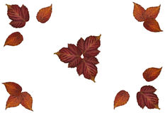 Drawing bouquet of dried leaves on watercolor paper, fall leaf,. Painted wooden planks, object, roughage autumn leaf, desiccated leaves of plants collected in Royalty Free Stock Images