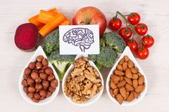 Drawing of brain and healthy food for power and good memory, nutritious eating containing natural minerals royalty free stock images