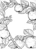 Drawing of branches with apples and leaves Stock Photo