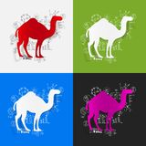 Drawing business formulas: camel Royalty Free Stock Images