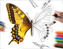 Drawing butterfly. Hand drawing a yellow buterfly stock image