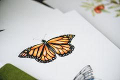 Drawing of butterfly on white paper royalty free stock images
