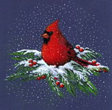 Drawing of Cardinal in Snow. A color pencil drawing of a Cardinal sitting atop snowy pine branches amidst red berries.  Created in the realism style as a Stock Photography