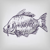 Drawing of a carp Stock Photos