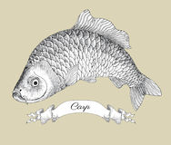 Drawing of carp with vignette Royalty Free Stock Photos