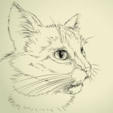 Drawing cat Royalty Free Stock Image