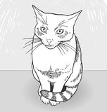 Drawing of a cat. Vector hand-drawn illustration of cute cat. Drawing in shades of grey. EPS 10 Stock Photo