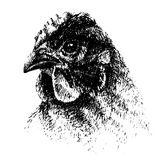 Drawing of chicken, graphic Royalty Free Stock Images