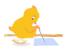 Drawing chicken on a pole. Small chicken draws a stick on paper Stock Photos
