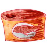 Drawing a children watercolor Canned, cartoon fish on a white ba. Ckground Royalty Free Stock Images