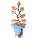 Drawing children watercolor plant pot on a white Stock Photos