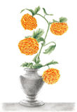 Drawing of a Chrysanthemums in a vase Royalty Free Stock Photos