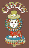 Drawing of circus theme - lion in a hat with Royalty Free Stock Image