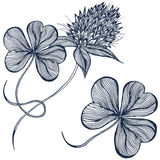 Drawing clover flower Royalty Free Stock Photo