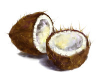 Drawing coconut Stock Photo