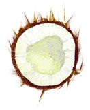 Drawing coconut Stock Image