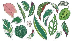 Vector art drawing collection of different popular exotic houseplant leaves like Begonia, Calathea, Pothos, Marante, Anthurium, Mo