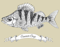Drawing of crucian with vignette Stock Images